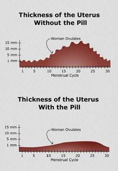uterus_pill